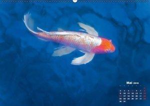 Koi: Juwelen im Teich (Wandkalender 2016 DIN A2 quer)