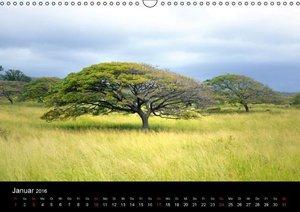 Bäume Hawaiís (Wandkalender 2016 DIN A3 quer)