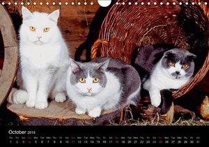 Cats (Wall Calendar 2015 DIN A4 Landscape)