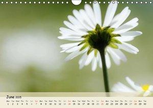 Pretty Daisies and Dandelions / UK-Version (Wall Calendar 2015 D