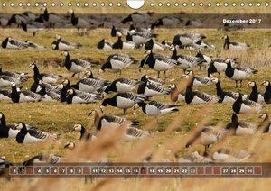 Deutschlands wilde Vögel zwischen Strand und Schilf