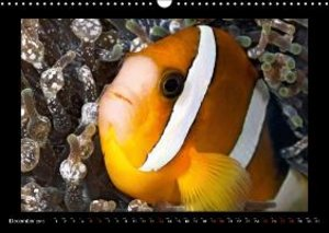 Jager, H: Anemonefishes / UK-Version
