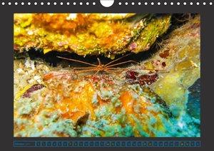Unterwasserwelt - Das Leben am Korallenriff