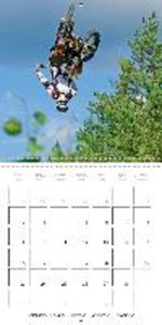 Motocross: Airborne on two wheels (Wall Calendar 2015 300 × 300