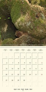 Spirits of the forest (Wall Calendar 2015 300 × 300 mm Square)