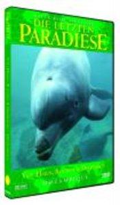 Mosambique-Von Haien,Rochen und Delfinen
