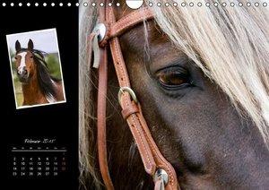 Wejat-Zaretzke, G: Irish Tinker (Wandkalender 2015 DIN A4 qu