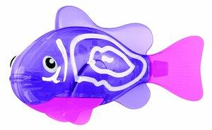 Robo Fish Purple Chromis