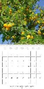 Ripe Fruits (Wall Calendar 2015 300 × 300 mm Square)