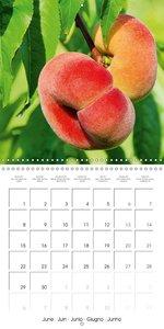 Ripe Fruits (Wall Calendar 2015 300 × 300 mm Square)