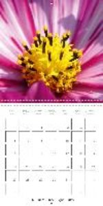 floral close-ups (Wall Calendar 2015 300 × 300 mm Square)