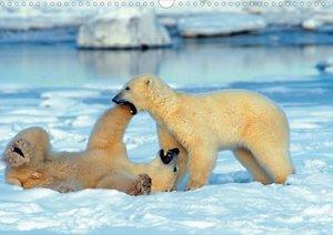 Eisbären (Posterbuch DIN A4 quer)
