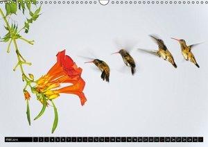 Etudes de mouvements (Calendrier mural 2015 DIN A3 horizontal)