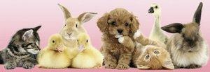 Tierische Freunde. Puzzle 500 Teile