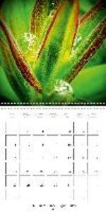 le calendrier des rosées (Calendrier mural 2015 300 × 300 mm Squ