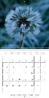 le calendrier des rosées (Calendrier mural 2015 300 × 300 mm Squ - zum Schließen ins Bild klicken