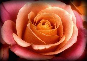 Sonate - Visuelle Musik der Blumen (Posterbuch DIN A4 quer)