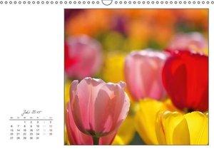 Dölling, A: Tulpen (Wandkalender 2015 DIN A3 quer)