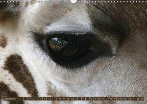 Giraffen - Sanftheit und Anmut