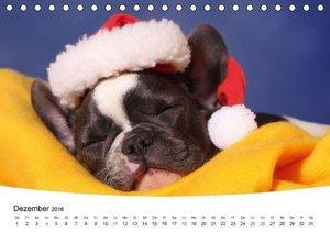 Bullys - Französische Bulldoggen 2016 (Tischkalender 2016 DIN A5