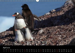 Antarctica (UK - Version) (Wall Calendar 2016 DIN A3 Landscape)