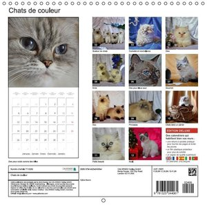 Chats de couleur (Calendrier mural 2015 300 × 300 mm Square)