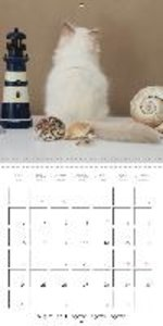 Sacred Birman Cats (Wall Calendar 2015 300 × 300 mm Square)