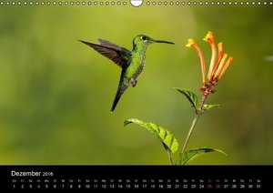 Costa Rica - Tiere des Regenwaldes (Wandkalender 2016 DIN A3 que