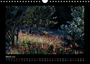 Poppies of my heart (Wall Calendar 2016 DIN A4 Landscape)