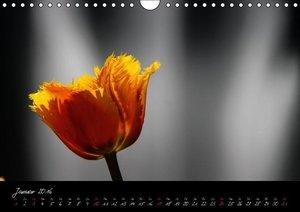 Butchart Gardens 2016 (Wandkalender 2016 DIN A4 quer)