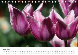 Tulpen (Tischkalender 2016 DIN A5 quer)