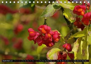 Rot - Red - Rosso - Rouge (Tischkalender 2017 DIN A5 quer)