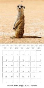 Meerkats: Cute companions (Wall Calendar 2015 300 × 300 mm Squar