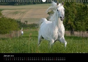 Pferdekalender (Wandkalender 2014 DIN A4 quer)