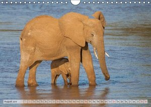Emotional Moments: African Wildlife. Part 3. / UK-Version (Wall