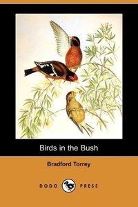 Birds in the Bush (Dodo Press)