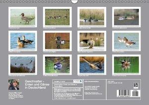 Geschnatter - Enten und Gänse in Deutschland (Wandkalender 2015