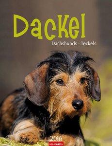 Dackel 2016