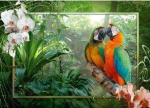 Papageien im Dschungel. Puzzle 1000 Teile