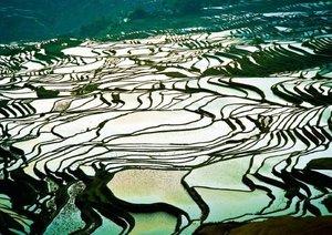 Die Reisfelder Asiens (Posterbuch DIN A3 quer)