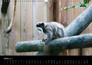 Les animaux du zoo (Calendrier mural 2015 DIN A3 horizontal)
