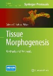 Tissue Morphogenesis