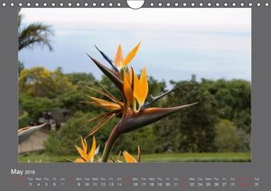 Flowers of Madeira - UK Version (Wall Calendar 2016 DIN A4 Lands