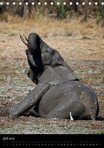Sanfte Riesen - Afrikas Elefanten (Tischkalender 2016 DIN A5 hoc