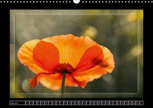 Poppies A Symphony In Red (Wall Calendar 2016 DIN A3 Landscape)