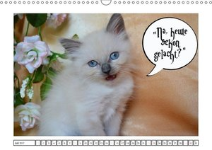 Lustiger Katzenkalender
