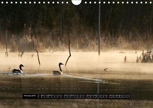 CANADA GOOSE / UK-Version (Wall Calendar 2015 DIN A4 Landscape)