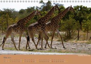 Afrika - Namibia Südafrika Botswana / CH - Version (Wandkalend