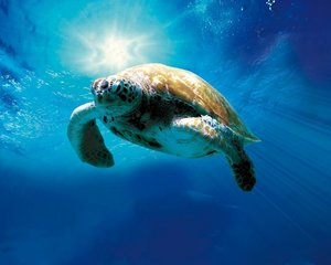 TORTUGA-Die Unglaubliche Reise D.Meeresschildkröte