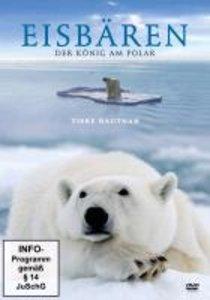 Eisbären-Der König Am Polarkreis